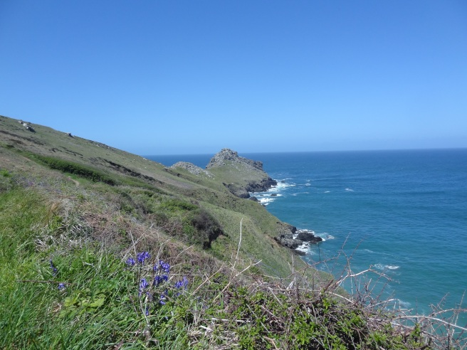 Looking along the length of Gurnard's Head. Bluebells were still flowering on the sheltered eastern side.